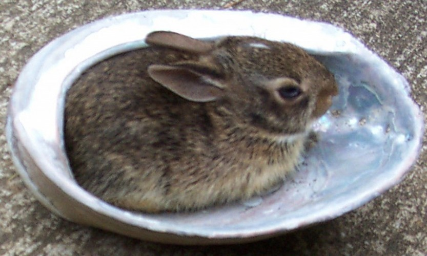Bunny On Half Shell