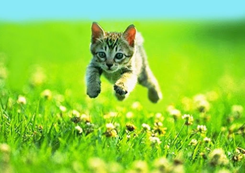 Flying kitten- shared by Marie Gabriel