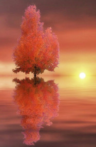 The Greatest Gift-poem: Gorgeous reflection of orange tree in water with the sun setting